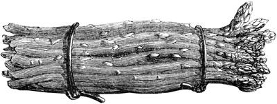 Asperges-lithographie-Ronjat-1874-les-causeries-culinaires-recettes-ancetres-boutique-cours-cuisine-histoire