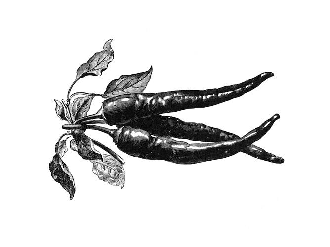 Piments-lithographie-1925-Jumelle-les-causeries-culinaires-recettes-ancetres-boutique-cours-cuisine-histoire