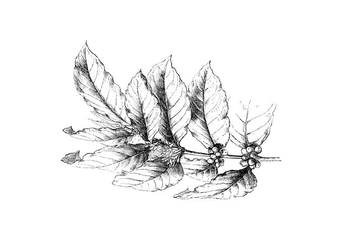 plante-jardin-saveurs-epices-anciennes-cuisine-historique-les-causeries-culinaires-toulouse-1200px
