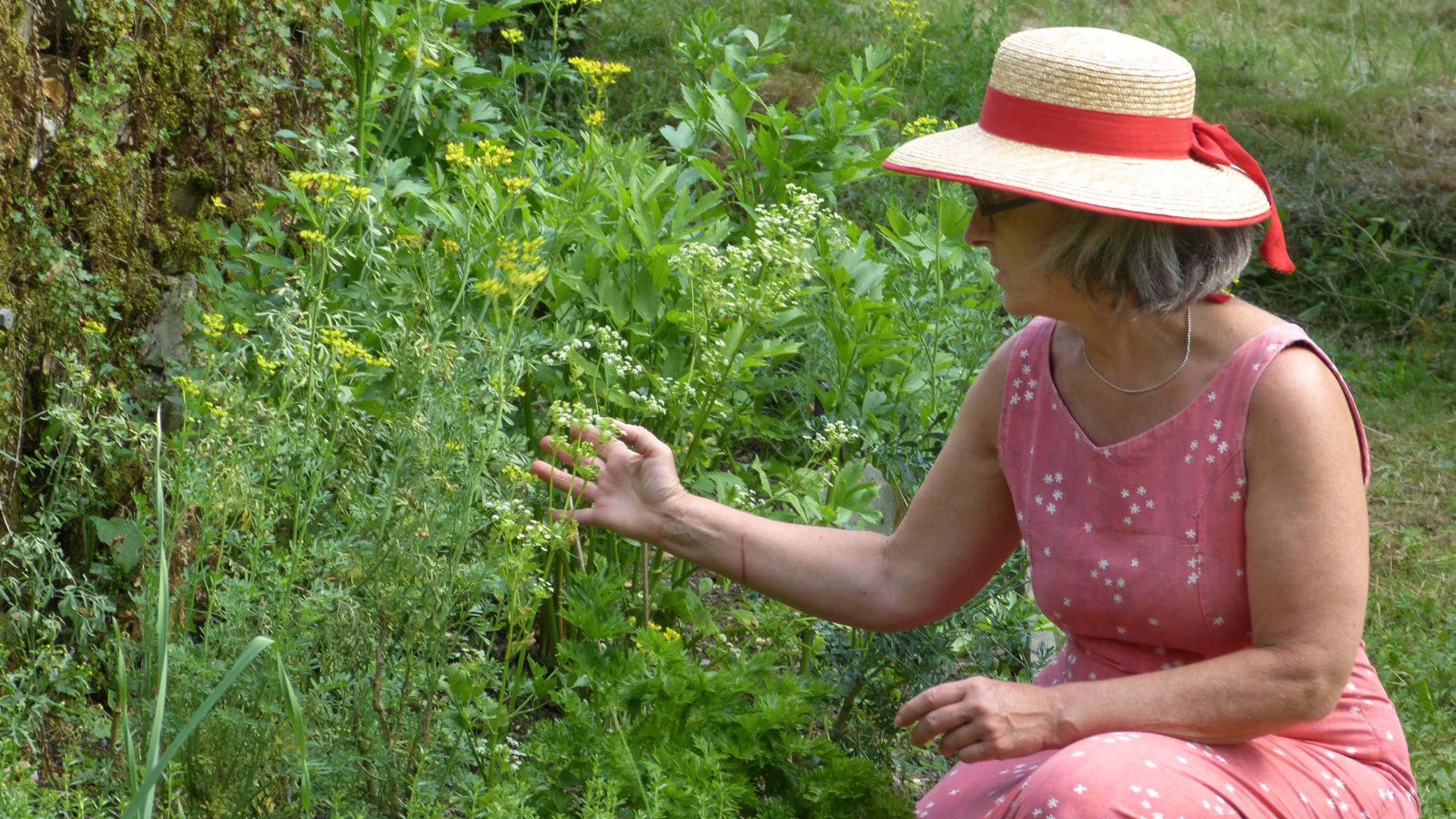 jardin-des-saveurs-villeneuve-sur-tarn-sylvie-campech-les-causeries-culinaires-jardin-aromatique-slide