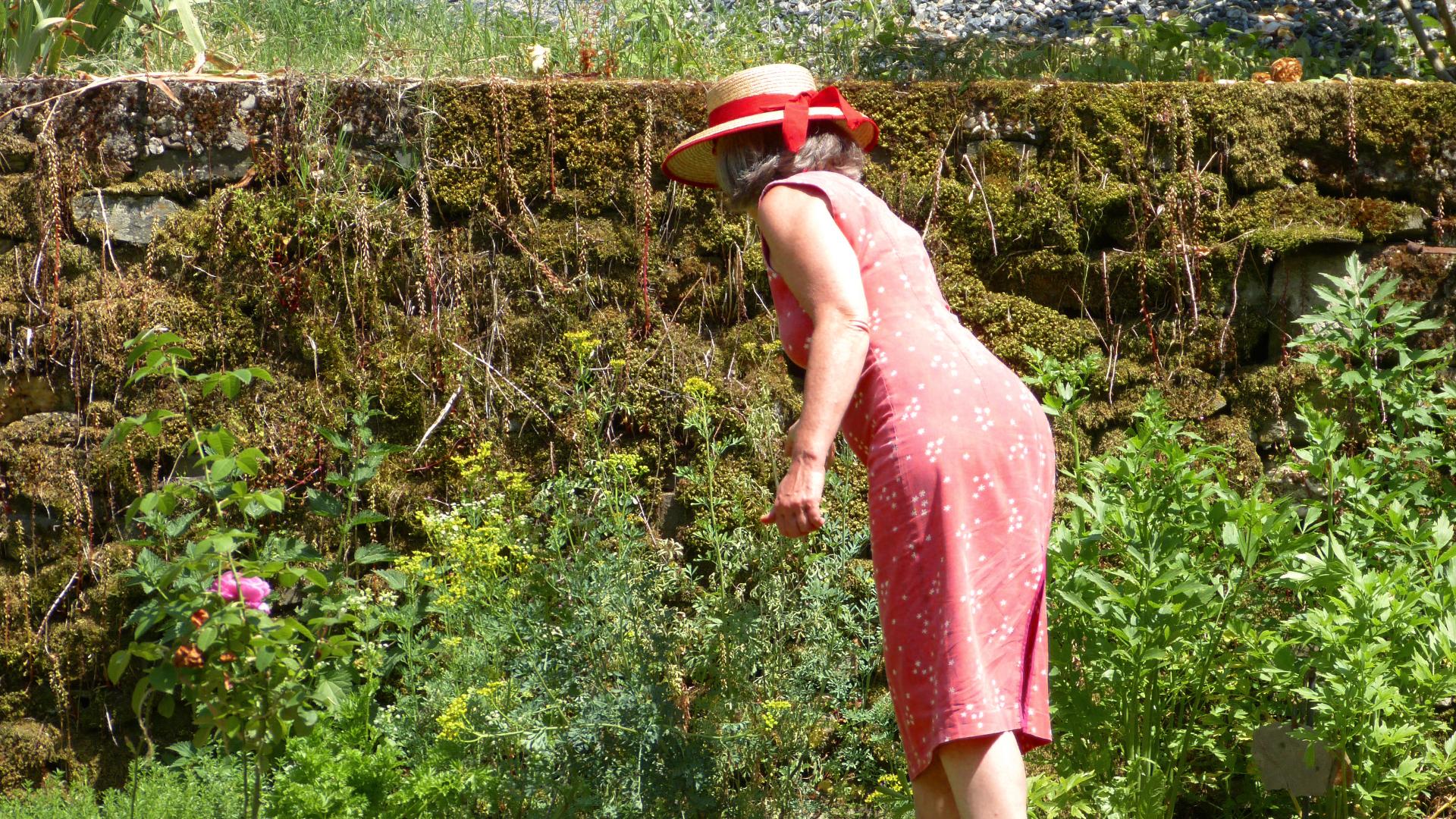 jardin-des-saveurs-villeneuve-sur-tarn-sylvie-campech-les-causeries-culinaires-plantes-aromatiques-slide